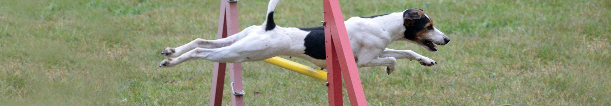 adiestramiento canino entrenamiento perros