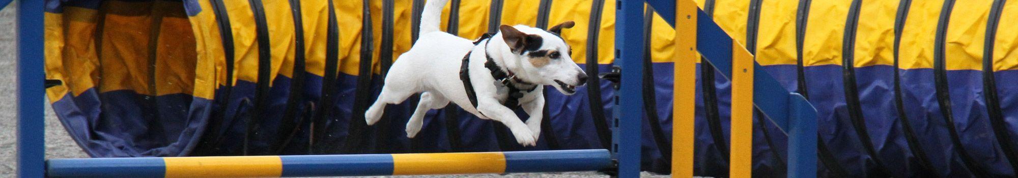 residencia para perros canina